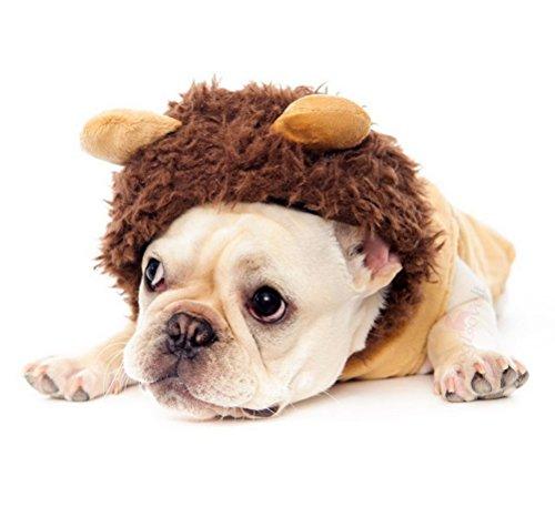 zunea Puppy Kleidung Hund Löwe Kostüm Farbe Hundemantel mit Kapuze für kleine Hunde