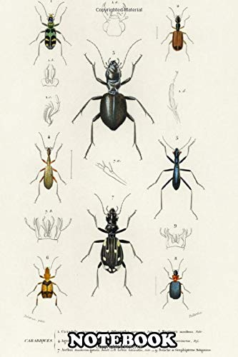 Notebook: Cicindela Tiger Odacantha Mel , Journal for Writing, College Ruled Size 6