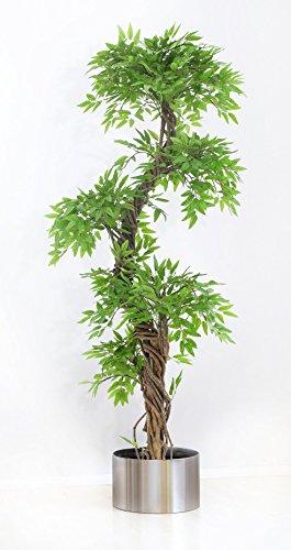Vert Lifestyle Arbre Oriental, A...