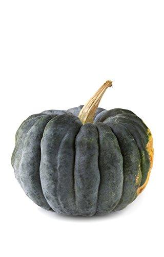 Kürbis Futsu Black (Cucurbita moschata) 10 Samen