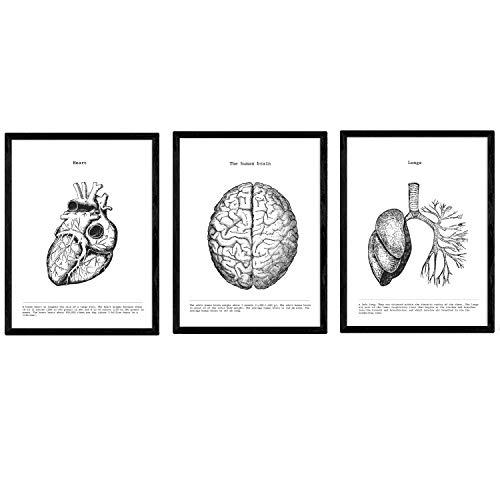Packen Anatomie Plakate. Hirn-Herz-Lungen. menschliche Körper. Anatomie Klingen mit menschlichen Körperteilen. A3 Größe