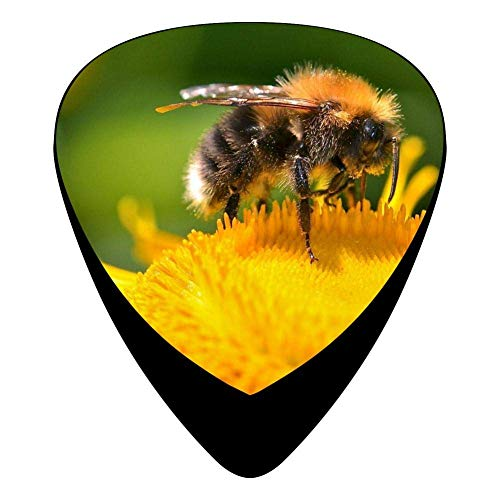 Pack Celluloid Complete 12 Guitar Print Assorted Bee Picks Insect Womens 9YHE2eWDIb