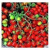 GEOPONICS 10 semillas de cereza RTP822 Roma