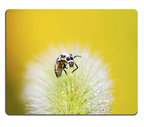 liili-mouse-pad-natural-rubber-mousepad-image-id-26355440-coccinella-larve-della-pianta-verde-in-the