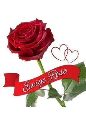 Ewige Rose Original von Ewige Rose - Du und dein Garten