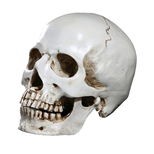 BESTOYARD Menschlicher Schädel Modell Resin Menschlicher Schädel Replik Skelett Modell Lustige Halloween Kostüme Spukhaus Scary Creepy Prop Maskerade Dekoration Ornamente