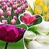 Grande Vente de Vente Hot Tulip bulbes Graines (Mix Couleur aléatoire) Fleur Graine de Bricolage Jardin...