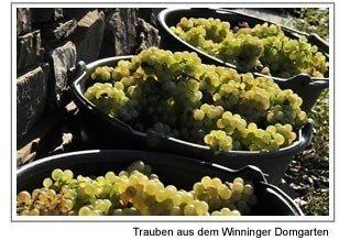 Weiwein-Weingut-Horst-Snner-Winninger-Domgarten-Riesling-Hochgewchs-halbtrocken-2017-3-x-075-l-VERSANDKOSTENFREI