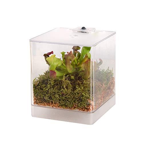 Swampworld Mini-Terrarium - Beleuchtung - Fleischfressende Pflanze - Trompetenpflanze