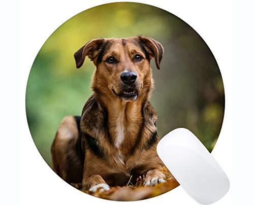 Mousemat Runde Mauspads, Haustierhund - genähte Ränder