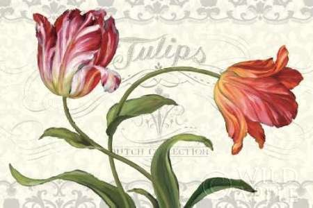 Feeling-at-home-Kunstdruck-Tulipa-Botanica-I-Creme-cm109x165-Poster-fuer-Rahmen