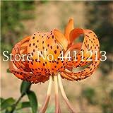 Bloom Green Co. 100 PC-Lilien-Blume, Lily Bonsai Blume, billiges Parfüm Lilien Topfpflanze für Gärten und Haus Mischen verschiedene Sorten: 23