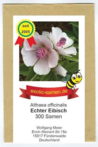Echter Eibisch - Althaea officinalis - mehrjährige, frostharte Zierpflanze - Gewürz- und Arzneipflanze - Halva - 300 Samen