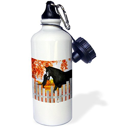 Gift, Precious Black Cat And Black Horse Sharing A Moment Of Friendship Behind A Picket Fence In Autumn White Stainless Steel Water Bottle for Women Men 21oz ()