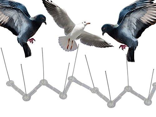 75-cm-de-haut-pour-perche-pigeon-oiseau-mouette-intruder-defender-dissuasif-cloture-mur-pics-disponi