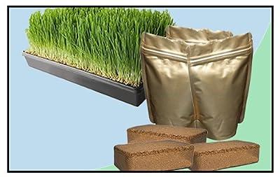 Wheatgrass Growing Kit - Small by THHC