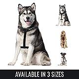BELISY Hundegeschirr reflektierend aus Nylon- Geschirr für große Hunde