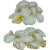 AVMART Sea Shells For Home Decor, Aquarium, Pack Of 2 (600 Gms) - B07CZD5M25