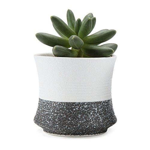 t4u-coree-style-neige-serie-no3-ceramique-pot-plante-recipient-pepiniere-pots-succulents-cactus-plan