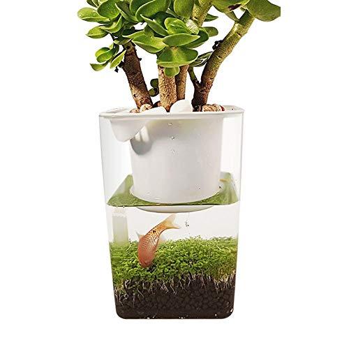 Beaviety Fischschalen für den Schreibtisch, für Fisch, Gemüse, Symbiotisches Wasser, Gras, Ultra-weiß, ökologischer Kunststoff (Gras Schreibtisch)