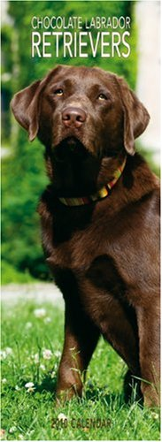 Chocolate Labrador Retrievers 2010 -