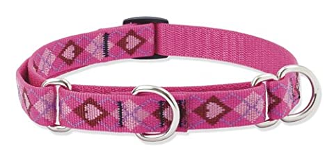 Lupine Puppy Love Patterned Combo Collar for Medium/ Large Dogs, 3/4-inch/ 14 - 20-inch