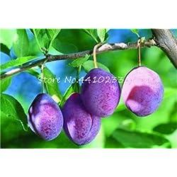 Pinkdose Hohe Qualität Bonsai Familie Brin Prunus Bonsai Ornamental Sweet Fruit Kirschpflaume Strauch Baum Pflanze, weit angebaut 10 Stück: a