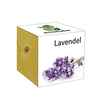 ecocube Holzwürfel - Lavendel von Inventive Trading bei Du und dein Garten