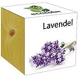 Extragifts ecocube Lavanda - piante nel cubo di legno