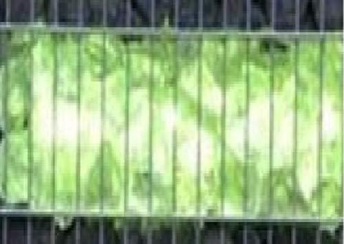 LED Gabionen Leuchte grün 50cm