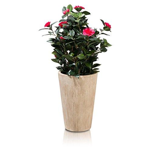 Pflanzkübel Blumenkübel LEXO Fiberglas Pflanztopf - Farbe beige geriffelt - robust, UV-beständiger, wetterfester&frostsicherer Blumentopf für Innen- & Außenbereiche