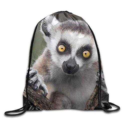 edc04ad6eb7e Lemur tshirts the best Amazon price in SaveMoney.es