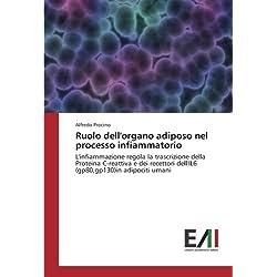 Ruolo dell'organo adiposo nel processo infiammatorio: L'infiammazione regola la trascrizione della Proteina C-reattiva e dei recettori dell'IL6 (gp80,gp130)in adipociti umani