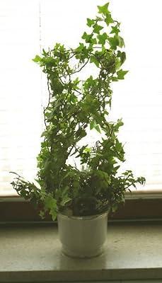 Rankhilfe Blumengitter Rankgitter von silenta auf Du und dein Garten