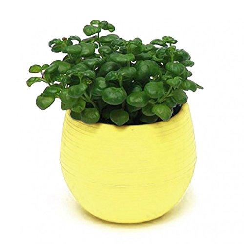 Diseño de plantas flores maceta con platillo bandeja Pallet maceta decoración de...