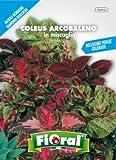 Sementi da fiore di qualità in bustina per uso amatoriale (COLEUS ARCOBALENO IN MISCUGLIO)