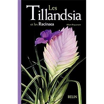 Les Tillandsias