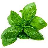 Portal Cool 1000 Basilic Genovese Grande Graines non traitee Vert Ocimum basilicum italienne