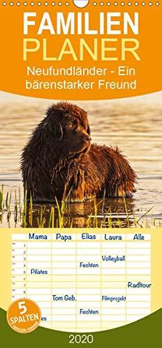Neufundländer - Ein bärenstarker Freund - Familienplaner hoch (Wandkalender 2020 , 21 cm x 45 cm, hoch): Der braune Neufundländer in 13 hinreißenden ... (Monatskalender, 14 Seiten ) (CALVENDO Tiere)