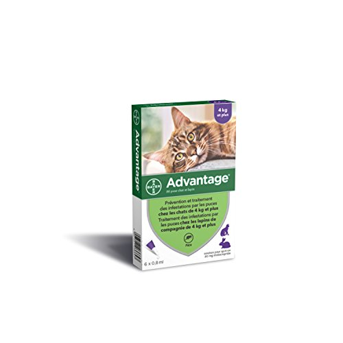 Bayer Advantage 80 Chat/Lapin 4-10 kg 6 pipettes antiparasitaires