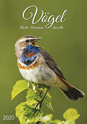 Vögel - Kalender 2020 - mit Nutzkalendarium - Korsch-Verlag - Wandkalender 23,5 cm x 33,5 cm