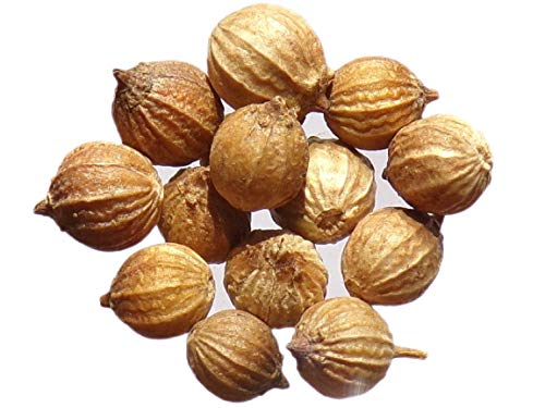 Coriandre à Petite Graine - 0,50 grammes - Coriandrum Sativum L.- Coriander With Small Seeds - SEM02