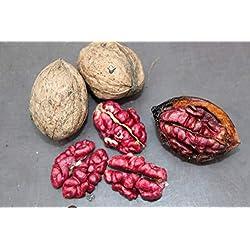 Walnuss Rosette (Rote Nüsse) - veredelte Pflanze im 5l Container