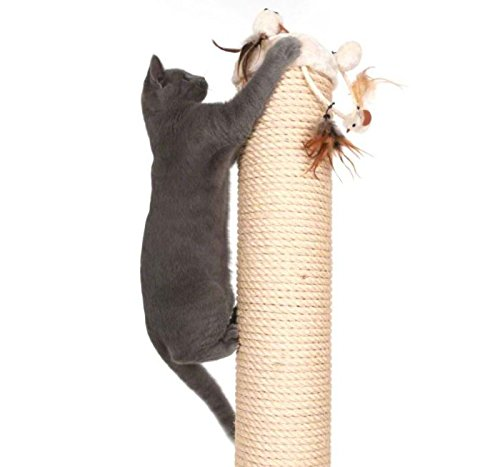 Jumbo Sisal-Coated Scratching Post XXL - Extremely Stable with Thick Sisal Coating and Extra Thick, Heavy Base Plate - Ideal for Larger and Heavier Cat Breeds such as Ragdolls, British Shorthairs or Maine Coons 7