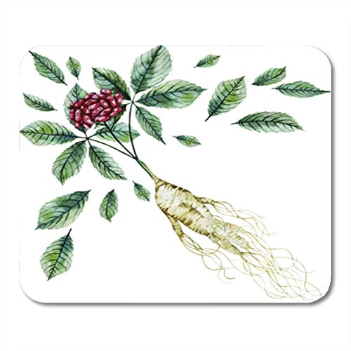AOCCK Gaming Mauspads, Gaming Mouse Pad Red Watercolor Ginseng Root and Berries Medicine Korean Chinese Oriental 11.8