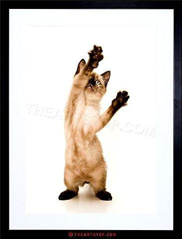 PHOTO CUTE SIAMESE KITTEN CAT PLAYING STANDING FRAMED PRINT F12X6314