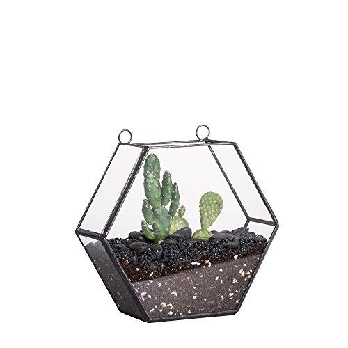 ncyp plantes achat vente de ncyp pas cher. Black Bedroom Furniture Sets. Home Design Ideas