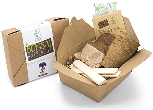 Satte Saat Bonsai Anzuchtset - Züchte Vier Bonsaibäume mit ökologisch abbaubaren Pflanztöpfen Sowie Kokos-Tabletten, inkl. Anleitung, Holz-Sticks und Samen - Ideales Geschenk für Frauen und Männer