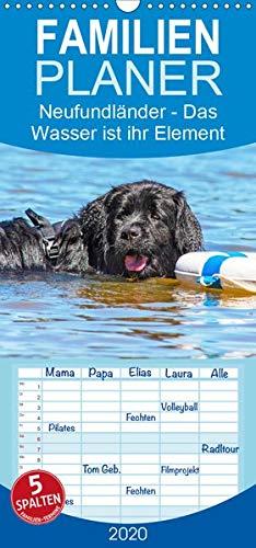 Neufundländer - Das Wasser ist ihr Element - Familienplaner hoch (Wandkalender 2020 , 21 cm x 45 cm, hoch): Neufundländer in allen drei Farben in ... (Monatskalender, 14 Seiten ) (CALVENDO Tiere)