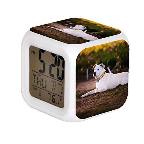 GIAPANO LED Alarm Colock 7 Farben Schreibtisch Gadget Alarm Digital Thermometer Nachtwürfel Helle Wohnkultur Erwachsene Gelbe Labrador Retriever -